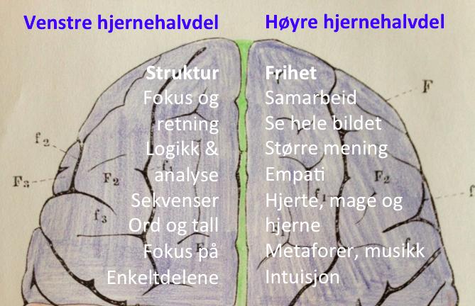 hjernens-to-ovre-hjernehalvdeler